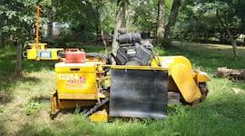 stump removal edinburgh