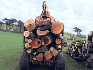 contract tree felling