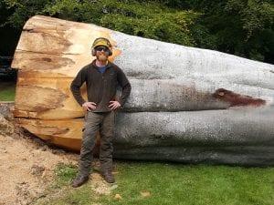 tree felling edinburgh