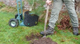 tree planting edinburgh