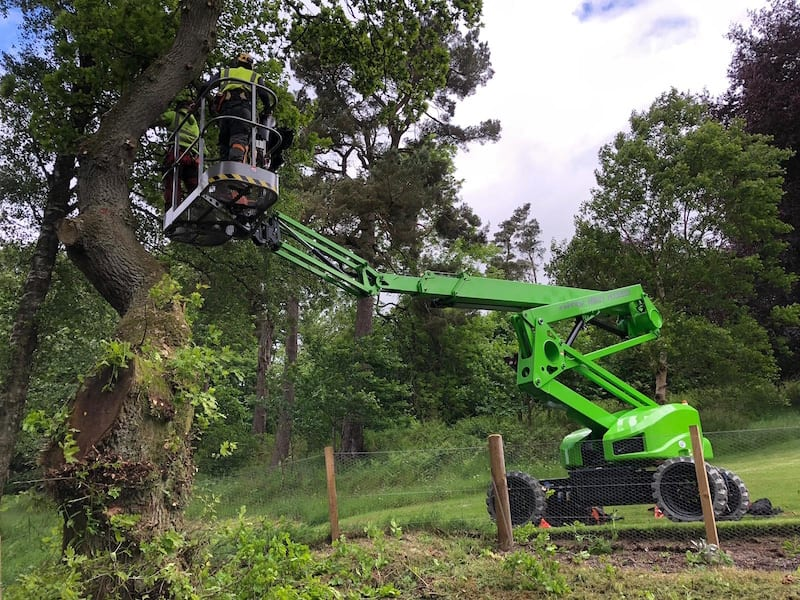 tree surgery from mewp