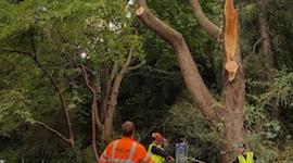 emergency tree work edinburgh