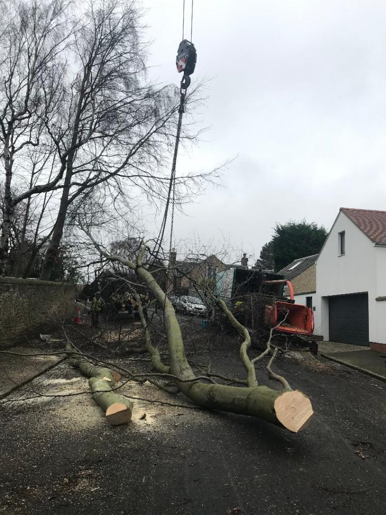 tree removal edinburgh