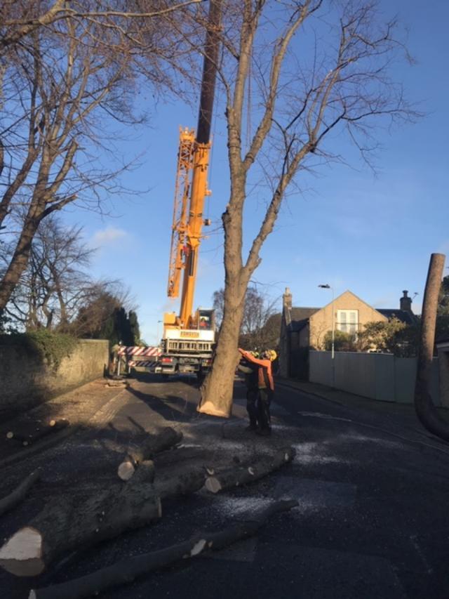 tree removal in edinburgh