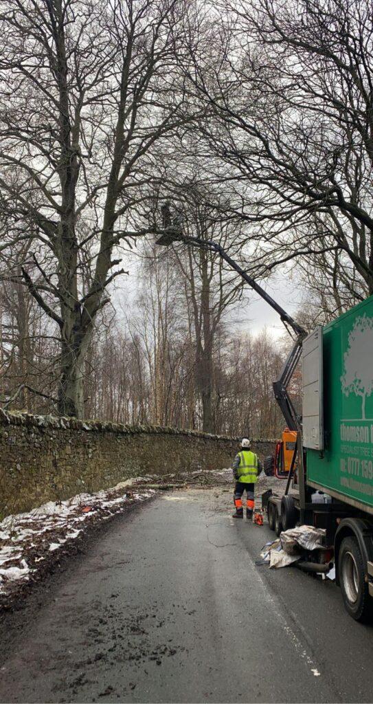 tree safety works on an estate south of Edinburgh.