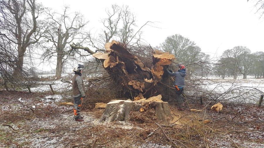 estate tree management
