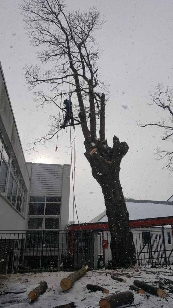 school site tree removal.