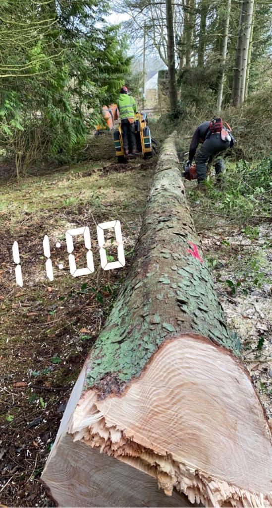 tree felling near penicuik